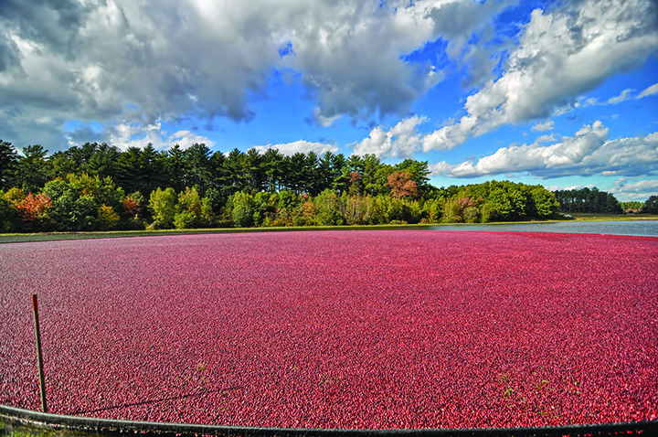 Cultivation Cranberry Marketing Committee