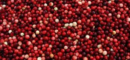 Stock Fresh Cranberries to Drive Seasonal Produce Sales